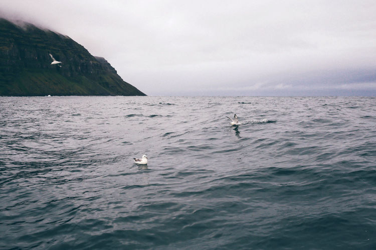 Cliff Clouds Europe Fjord Iceland Nature Naturelovers Outdoor Outdoor Photography Outdoors Rock Sea Seagulls Seaside Travel VSCO Vscocam Water Waves