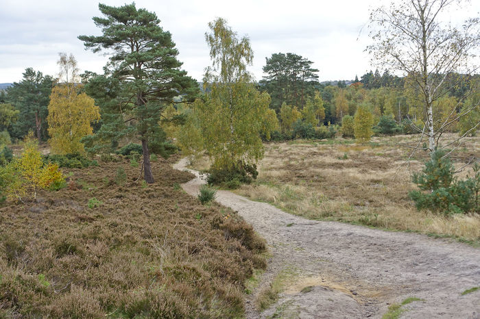 Blackheath Common near Wonersh in Surrey. Autumn Autumn Collection Autumn Colors Autumn Colours Autumn Leaves Autumn🍁🍁🍁 Blackheath Common Bracken England Fall Fall Beauty Fall Colors Fall Leaves Fern Forest Guildford Surrey Surrey Countryside Uk Wonersh WoodLand Woods