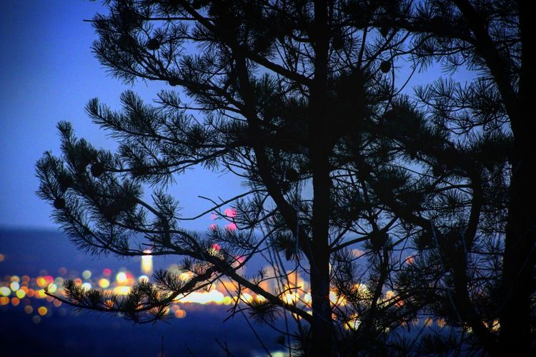 There is beauty in your backyard. EyeEmNewHere Canon Canonphotography Out Of Focus No Filter, No Edit, Just Photography Nostalgia Travel Photography Mountain Top Breathtaking Pine Tree Hartford Cityscape City Lights Nightphotography Hiking Beautiful Wandering Spring Tree Branch Sky Silhouette Outline Sunset Treetop Tranquil Scene Plant Life Orange Color Evening HUAWEI Photo Award: After Dark