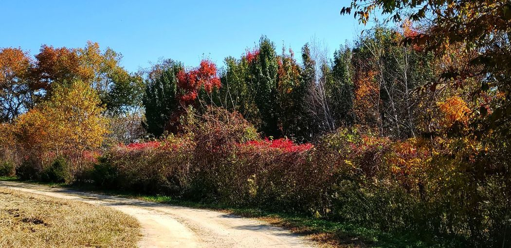 A beautiful autumn day Tree Flower Sky Plant Plant Life In Bloom Botany Garden Path Botanical Garden
