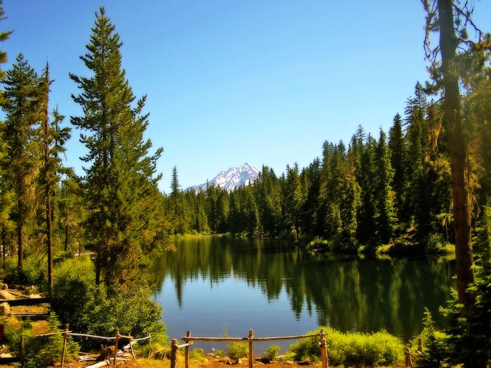 Oregon Beauty Oregon Cascades Beauty In Nature Clear Sky Coniferous Tree Day Forest Green Color Growth Lake Land Mt Jefferson Nature No People Non-urban Scene Outdoors Plant Reflection Scenics - Nature Sky Tranquil Scene Tranquility Tree Water