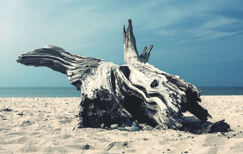 Showcase March Beach Driftwood Wood Widerness Nature Outdoors Rotten Worn Out Wooden Sand Landscapes With WhiteWall The KIOMI Collection Fine Art Photography Perspectives On Nature