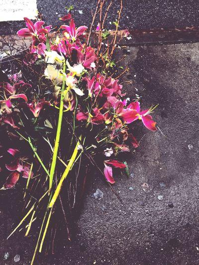 Flowers Tossed Sidewalk Fromwhereistand