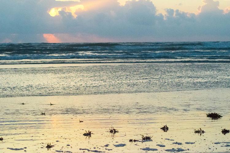 New Smyrna Beach Sunrise Sunrise_Collection Sunrise_sunsets_aroundworld Beachphotography Beach Life Beach Florida Life Florida Skies GayneGirlPhotography Florida EyeEm Best Shots EyeEm Gallery EyeEmBestPics Eyemphotography EyeEm Best Shots - Nature EyeEm Best Shots - Sunsets + Sunrise