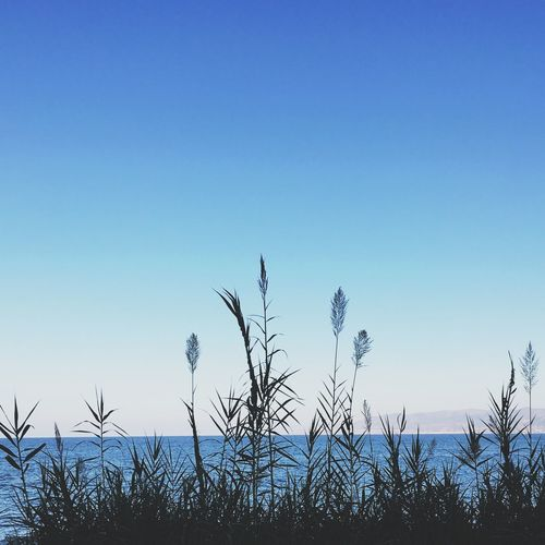 Nature Negative Space Sky IPhoneography Crete Sea Blue Blue Sky Summer