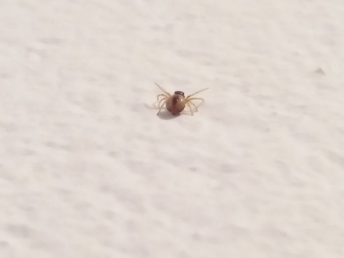 One Animal Spider Crawling No People Small Eyeem Weekly The Week On Eyem Taking Photos New Life Insect Photography Macro Insect Collection Arachnid Selective Focus Teeny Tiny