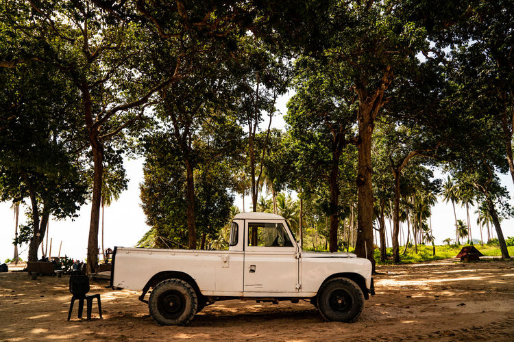Vintage car parked on road along trees