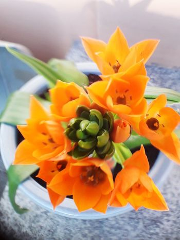 Flower Head Springtime Flowers Romantic Knospe Sringtime Sommer Sring Flower Springtime Close-up EyeEmNewHere