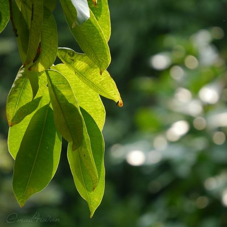 Leaf Close-up Green Color No People Nature Defocused Animal Wildlife Outdoors Insect Focus On Foreground Day One Animal Animals In The Wild Plant Beauty In Nature Animal Themes Fragility Tree Freshness