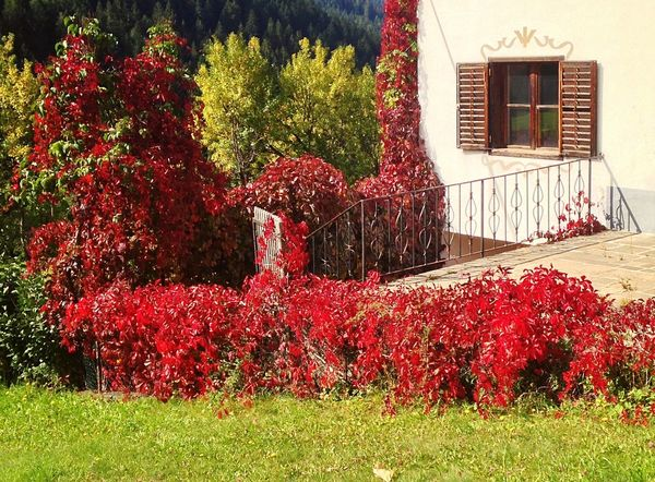Autumn Autumn Colors Autumn Leaves House Fence Nova Levante Welschnofen South Tyrol Italy Window Building Exterior Red Tree Plant Front Or Back Yard Architecture Growth No People Built Structure Grass Outdoors Nature Flower Day Ivy Beauty In Nature