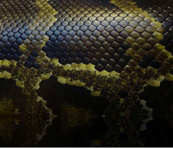 Slytherin Pride Upload Snakeskin Pottermore