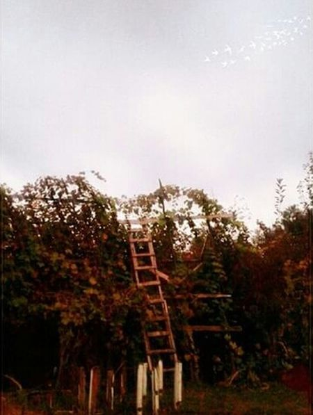 EyeEmBestPics Popular Photo Popularpic Populart Landscape_photography EyeEm Nature Lover EyeEm Gallery