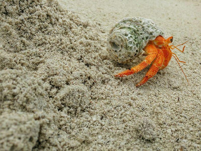 Silvalines Macro Photography Macroclique Macroporn Macro_collection Hermit Crab Hermitcrabs Hermitcrab Beach Beachlife