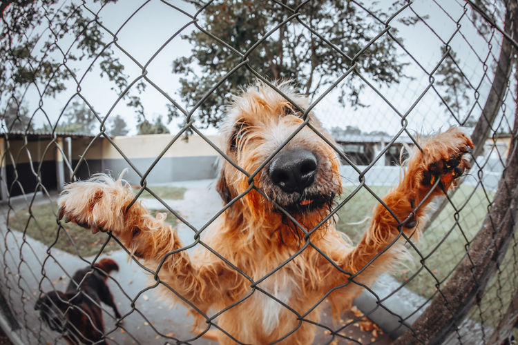 Dog Mammal Canine Domestic Pets Domestic Animals Animal Themes Animal One Animal Fence Barrier Boundary Vertebrate Chainlink Fence Security Protection No People Day Focus On Foreground Outdoors Animal Head  Mouth Open