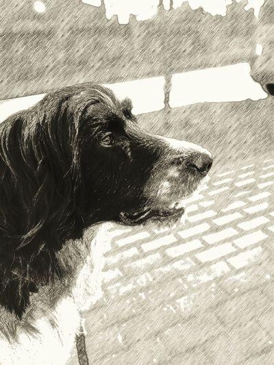 Irish Wolfhound Mix Dog Domestic Animals Animal Themes One Animal Day Outdoors Shadow Spazieren Und Fotografieren Bleistiftzeichnung Border Collie Mix No People Dog❤ Hundefotografie