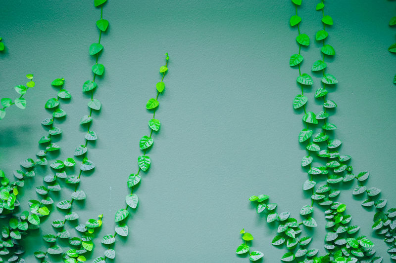 Close-up of green leaves against wall