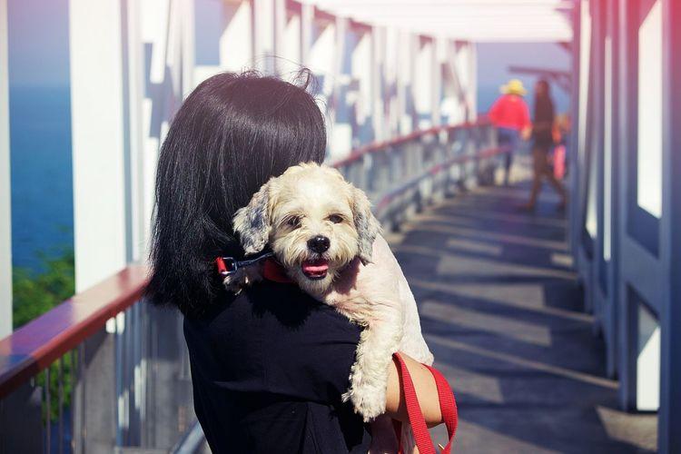 Dog Girl Animal