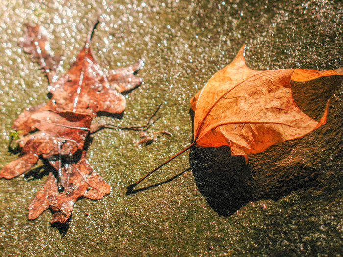 Leaves Fallen Leaves Autumn🍁🍁🍁 Wet Leaves Nakednature Still Life Genesis God Clothed Them