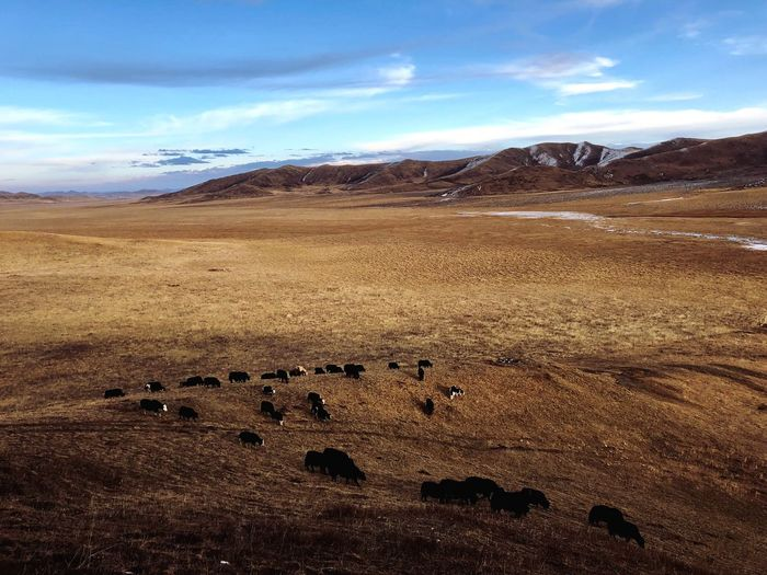 Sky Animal Themes Cloud - Sky Large Group Of Animals Landscape Mountain Mammal Nature Scenics No People Outdoors Mountain Range Day Beauty In Nature Horizon Over Land Sheep Domestic Animals Animals In The Wild Flock Of Sheep Grass