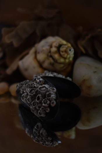 sea shell portrait Sea Malephotographerofthemonth Nature Photography Wildlife & Nature Nature Still Life Sea Life Sea Shells Reflections And Shadows Closeup Photography Shells Close-up