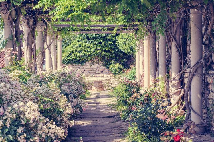 Romantic Vintage Garden with Flowers and Columns.