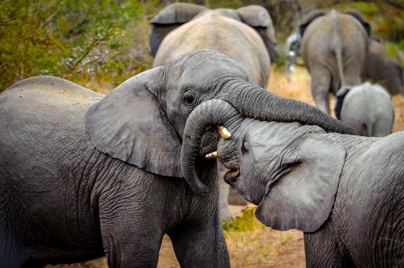 Close-up of elephant