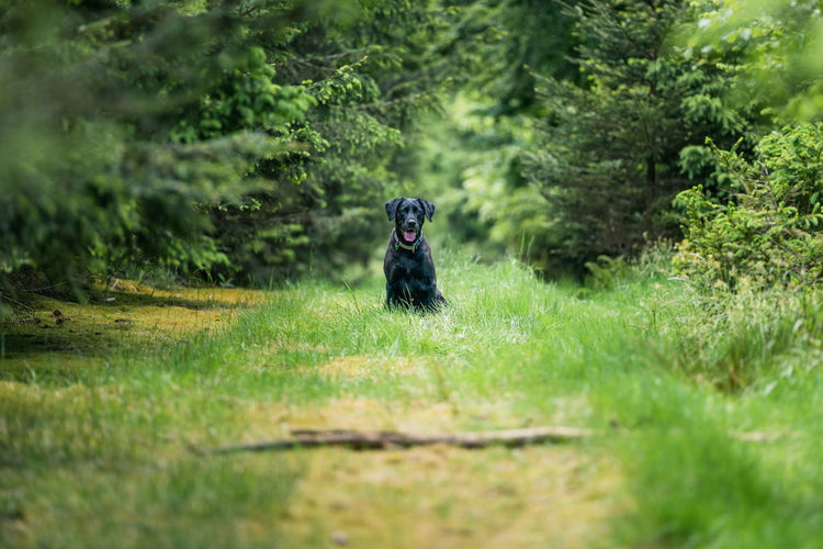 Small dog in a forest