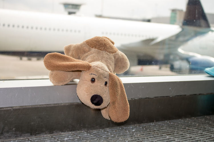 Airplane Childhood Focus On Foreground Holiday Lost Outdoors Piggy Bank Stuffed Stuffed Animal Stuffed Toy Teddy Bear Toy Toy Animal