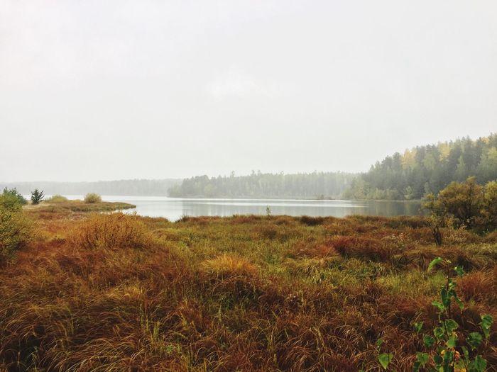 Лес Качканар лес и природа река качканар осень