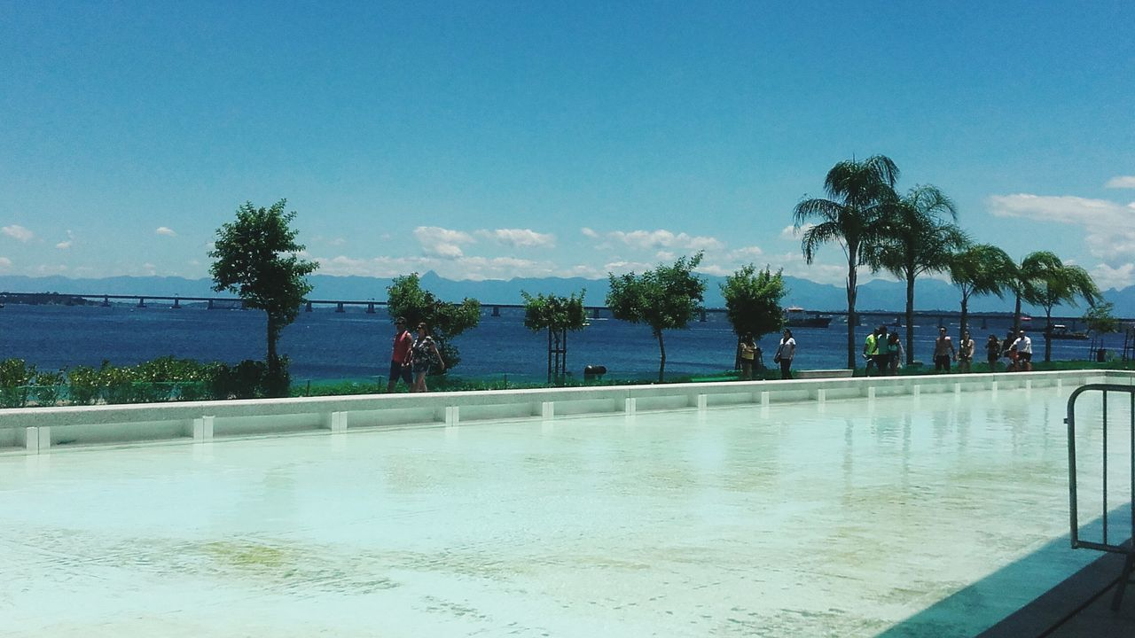tree, water, palm tree, swimming pool, sea, sky, growth, blue, nature, outdoors, day, beauty in nature, no people