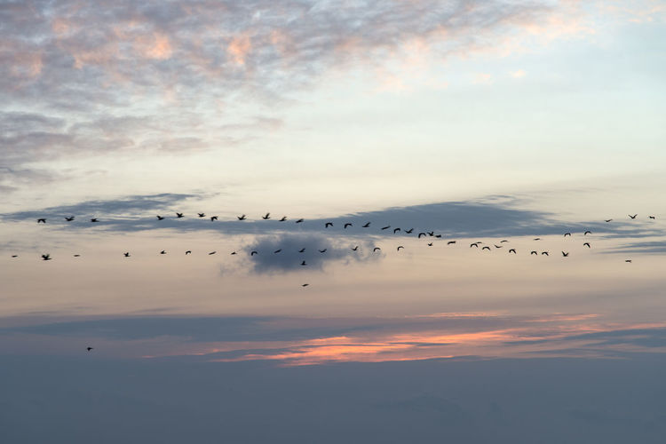 Silhouette Birds Migrating Against Sky During Sunrise