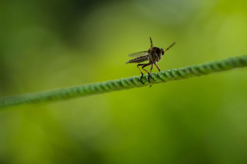 Huray... Hello World Check This Out Hanging Out Hi! Close-up Enjoying Life No People Day Nature Insects  Insect Photography Green Color Green Nature Getty Getty & EyeEm Collection Getty & Eyeem Getty Images Getty+EyeEm Collection