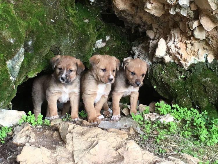Cave Natural Life Cevremdekisessizhareketler