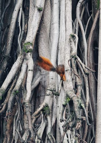 Squirrel plays hide and seek Swinginginaplumtree Find The Squirrel Animal Hide And Seek Squirrel Photography Squirrels Squirrel EyeEm Selects Nature Day High Angle View Sunlight No People Outdoors Animals In The Wild