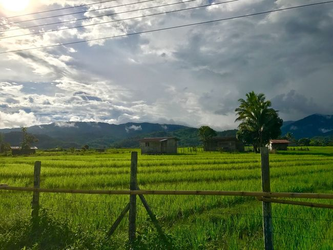Paddy field Field Agriculture Landscape Rural Scene Paddy Field Tranquility Mountain Scenics Day Mountain Range Growth Paddyfield Perspectives On Nature