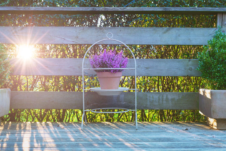 Potted plants on wooden fence