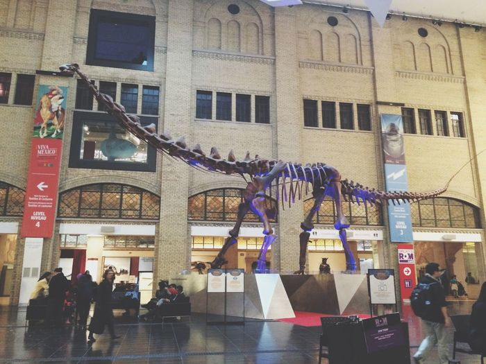 Dinosaurs in the Royal Ontario Museum. Artifacts Rom Downtown Toronto 6ix Museum Dinosaur Photography Photooftheday