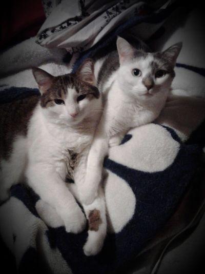 cats Sister Cat