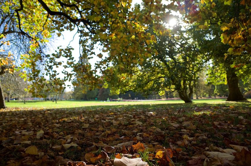 Cardiff Bute Park Leaves🌿 Autumn Sunlight Sun Relaxing Moments Tree Outdoors Nature Beauty In Nature Perfect Saturday Afternoon