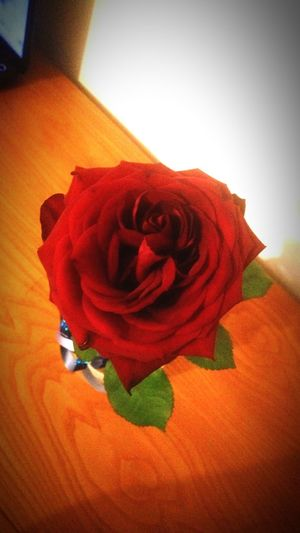 Flower Red Roses Roses🌹 Rose🌹 Rose - Flower Love Love ♥ Red Rose Fragility