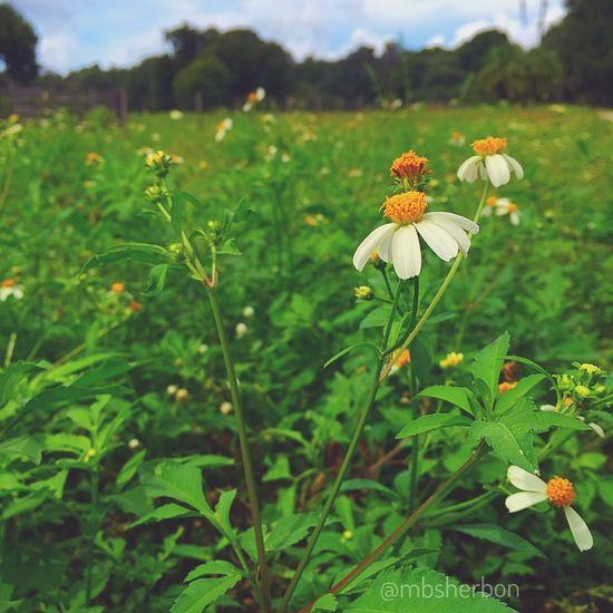 Wildflowers Pasture Flowers Florida Nature Explore Wideopenspaces Plants And Flowers Landscape Backroads