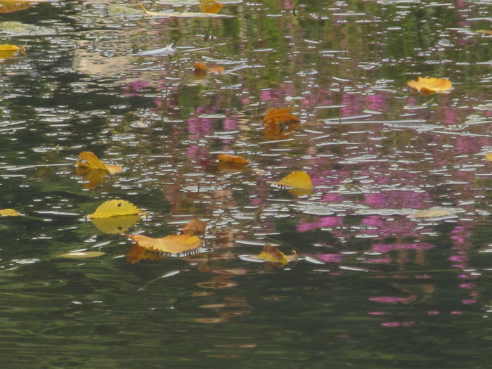 Reflection of flowers in lake