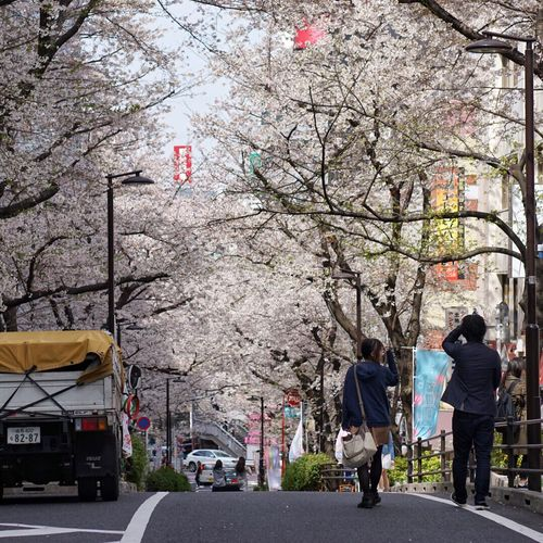 Two People Tree Real People Leisure Activity Lifestyles Men Women Full Length Outdoors Land Vehicle Day Building Exterior Architecture Togetherness People Nature Adults Only Adult Streetphotography Street Photography Cherry Blossoms Brilliant April Sakura EyeEm Best Shots