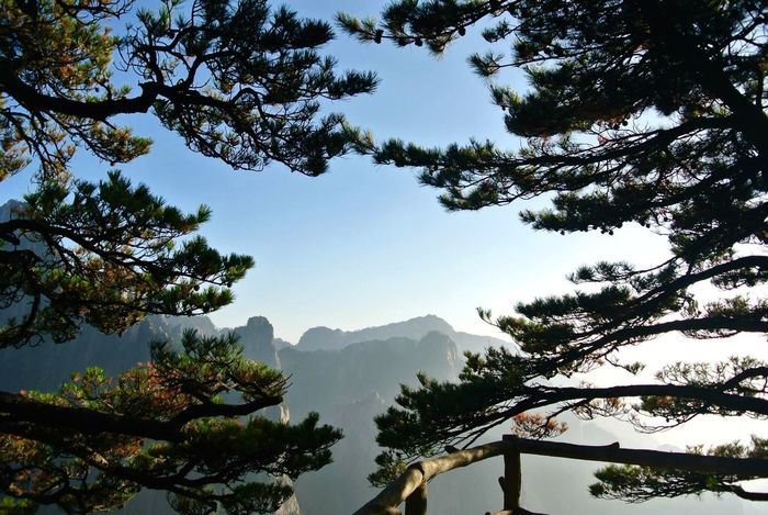 Trees Beauty In Nature Low Angle View Mountain WoodLand Sky Mountain Range Outdoors China View Yellow Mountain