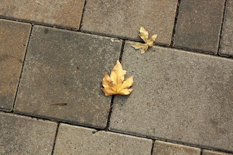 Leaf Street No People Day Vintage Lenses Vintage Lens On Modern Camera Leafy Domiplan 50mm/f2.8 Meyer-Optik-Görlitz Domiplan 50mm Vintage Lens Photography Hodmezovasarhely DomiplanChange Vintage Lens Leafphotography Autumn High Angle View Outdoors Nature Maple Leaf Close-up Fragility Maple
