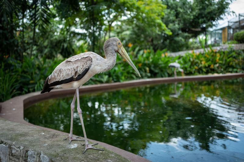Kuala Lumpur Water Animal Themes Bird Animals In The Wild Animal Wildlife Animal Vertebrate One Animal Nature Focus On Foreground Day Lake Reflection No People Plant Perching Tree Outdoors Beak Stork Birdpark