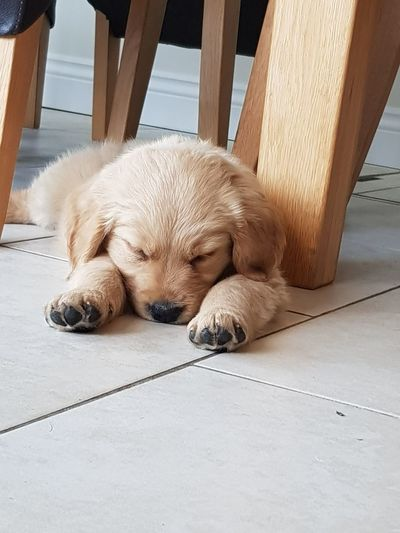 EyeEm Selects Dog Animal One Animal Mammal Lying Down Sleeping Pets No People Outdoors Day Close-up Animal Themes