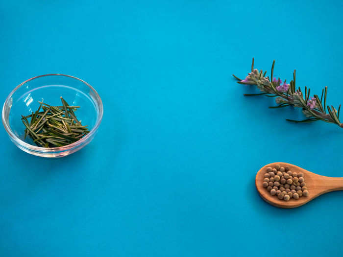 High angle view of potted plant on table against blue background