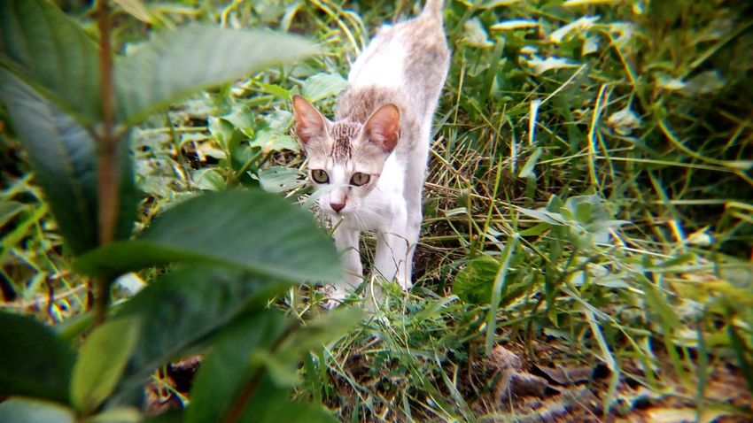 EyeEm Selects Animal Wildlife One Animal Social Issues Nature No People Mammal Day Outdoors Grass Animal Themes Portrait Close-up Shot With Mobile Clip Lens Cat Kitten Domestic Animals Pets Domestic Cat Animal Pet Portraits