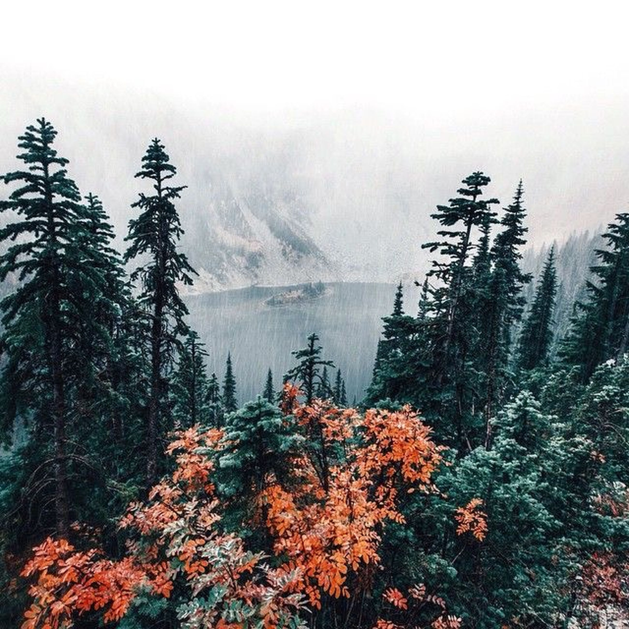 tree, tranquility, tranquil scene, beauty in nature, scenics, mountain, nature, growth, fog, sky, foggy, weather, non-urban scene, plant, idyllic, forest, season, water, outdoors, day